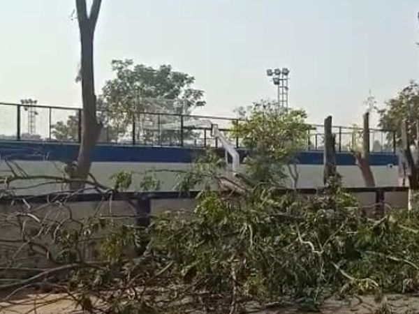 જવાહર ગ્રાઉન્ડ રોડ પર વૃક્ષોનું કટીંગ કરવામાં આવ્યું ફરીયાદ ઉઠી હતી. - Divya Bhaskar