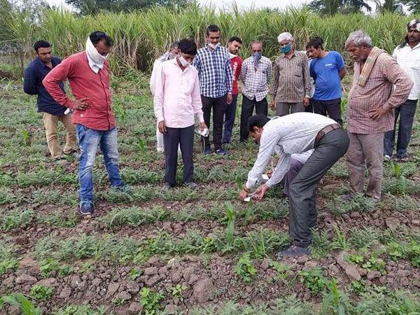 જમીનમાં ઓછા ખર્ચે વધુ નફો થાય અને ખેડૂત આર્થિક રીતે સદ્ધર બને તે માટે માર્ગદર્શન આપવામાં આવે છે. - Divya Bhaskar