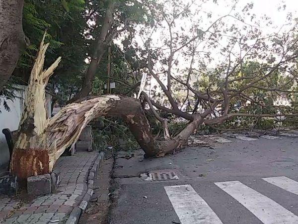 ઝાડ રસ્તા પર પડતાં એક તરફનો રસ્તો બંધ કરી દેવાની ફરજ પડી હતી. - Divya Bhaskar