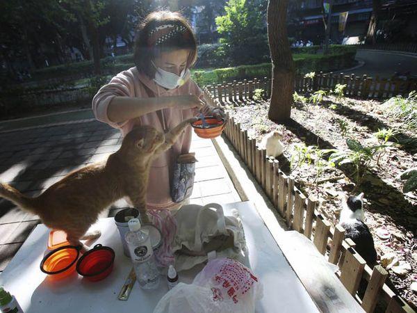 તાઈવાનની રાજધાની તાઈપેઈમાં શેરીઓમાં ફરતી બિલાડીઓની કેર લેવામાં આવી રહી છે. અહીં બિલાડીઓ માટે 'કાફેટેરિયા' બનાવાયા છે.