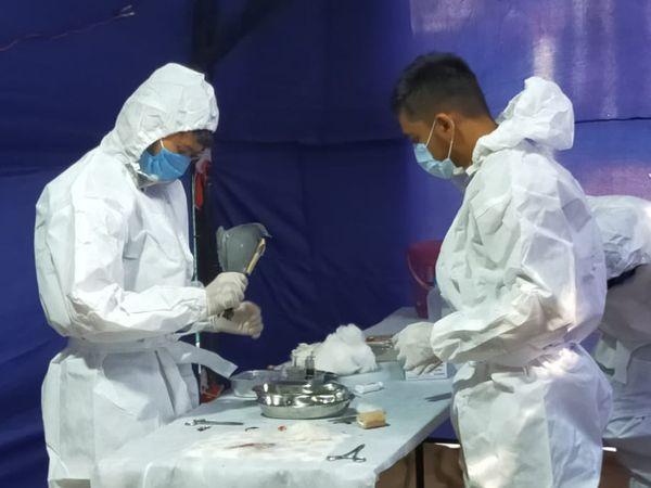 PPE કીટ પહેરીને પક્ષીઓને સારવાર અપાઈ - Divya Bhaskar