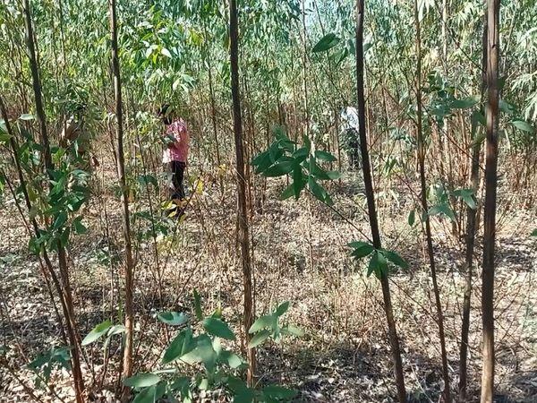 ગંધારા ગામની સીમમાંથી હત્યા કરાયેલી હાતલમાં યુવાનની લાશ મળી આવી