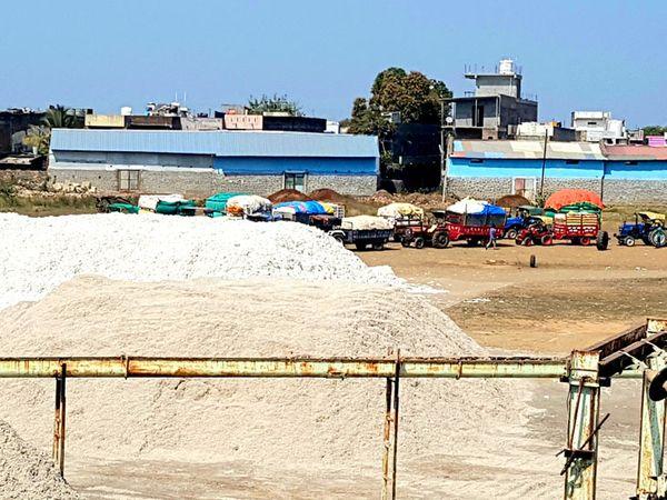 નસવાડી સીસીઆઈમાં શુક્રવારે કપાસ ખરીદી કરાઈ હતી. - Divya Bhaskar