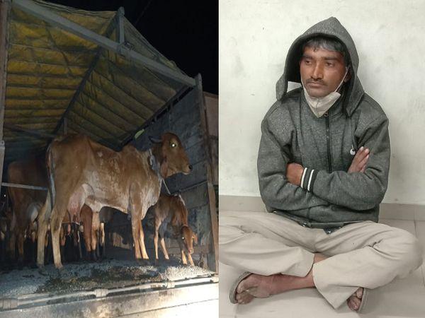 ગોંડલ પોલીસે ટ્રક ડ્રાઈવરની ધરપકડ કરી - Divya Bhaskar