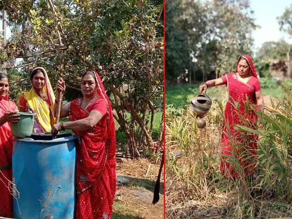 ગાયના મળ-મુત્રનો ઉપયોગ કરીને પ્રાકૃતિક ખેતી કરવાનું શરૂ કર્યુ. - Divya Bhaskar