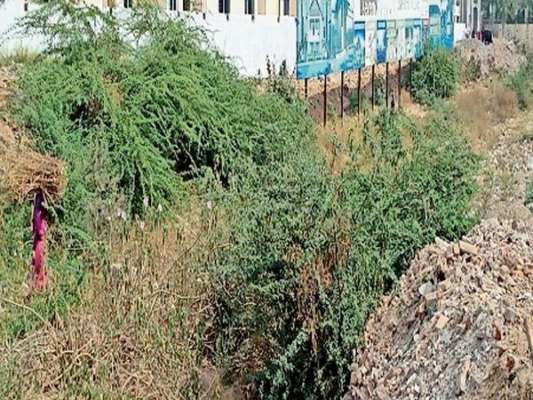 મલ્હાર બંગલોઝ સામે કેનાલમાં સફાઈન કરતાં કચરાના ઢગ જામ્યા. - Divya Bhaskar
