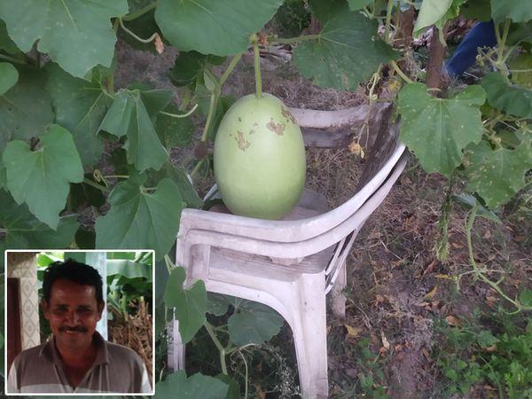 શિનોર નગરમાં યુવાન ખેડુત ભાઈઓએ પોતાના ખેતરની પડતર જમીનમાં શાકભાજી ની વાવણી કરી રોજી મેળવેલ છે.  - જગદીશ વાળંદ - Divya Bhaskar