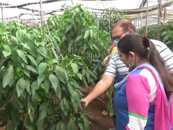 પ્રગતિશીલ ખેડૂત મરચાંની ખેતી વિશે અન્ય ખેડૂતોને પણ માહિતી આપતા હોય છે.