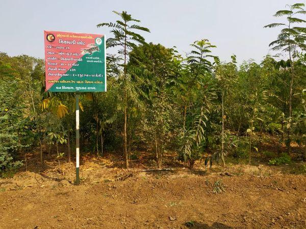 વડોદરા નજીક ભોજ ગામમાં 831 રોપાની સઘન વનરાજી ઉછેરવામાં સફળતા મળી છે - Divya Bhaskar