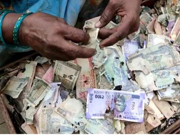 ઘરે રાખેલા આશરે પાંચ લાખ રૂપિયાને ઉધઈએ કોરી ખાતા પૈસા કચરો થઈ ગયા - Divya Bhaskar