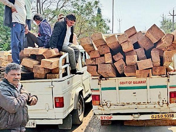 સોનગઢ ના ઘાસિયામેઢા ગામે થી જંગલચોરી દ્વારા લાવવામાં આવેલ સાગી લાકડા કબ્જે લેવામાં આવ્યા હતા. અને જ્યાંથી આ સાગી લાકડા કબ્જે લીધા એ ઘર દેખાઈ છે અને કામગીરી કરનાર સ્ટાફ - Divya Bhaskar