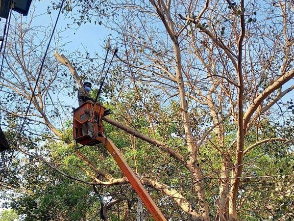 કોર્પોરેટર કુંદનબેન કોઠીયાએ કોર્પોરેશનના અધિકારીઓને બોલાવીને તાત્કાલિક અસરથી વૃક્ષની ડાળીઓ કપાવી હતી.