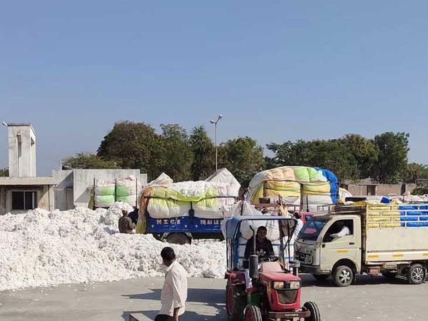 વડાલી માર્કેટયાર્ડમાં છ માસમાં કપાસની મબલક આવક - Divya Bhaskar