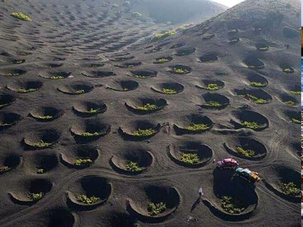 વાઈનનો આસ્વાદ માણવા લોકો હંમેશા આતુર હોય છે પરંતુ વાઈનનો ટેસડો લાવવામાં ખરેખર તો કુદરતની જ કમાલ હોય છે. કઈ રીતે? જૂઓ આગળ... - Divya Bhaskar