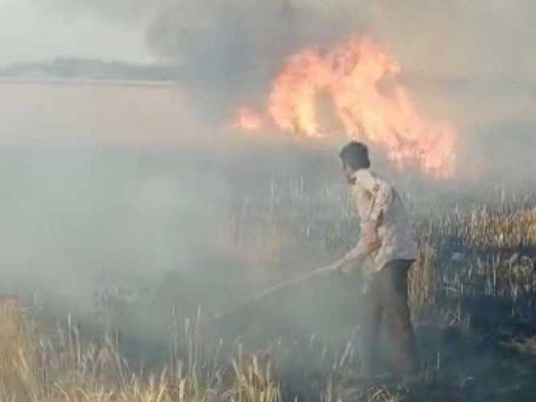 ગુરુવારે ખેતરમાં લાગેલી આગને કારણે ધઉનો પાક બળી ગયો હતો. - Divya Bhaskar