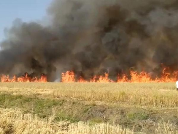 હળવદ તાલુકામાં ખેતરમાં આગ લાગવાનો સતત બીજો બનાવ બનતા ખેડૂતોને આર્થિક નુકસાન થયું હતું. - Divya Bhaskar