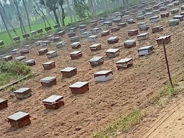 ગેળાનો ખેડૂત મધ ઉછેરમાં વર્ષે 10 લાખનો નફો રળી રહ્યો છે. - Divya Bhaskar