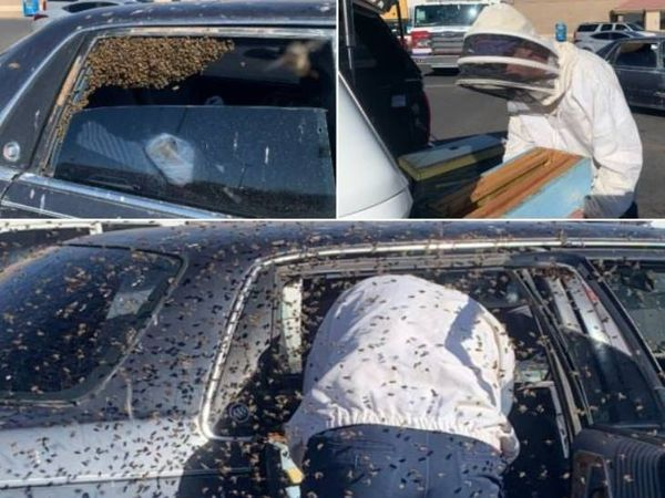 કારની પાછળની સીટ પર ઢગલો મધમાખી હોવાથી રેસ્ક્યુ માટે ફાયરટીમને જાણ કરવામાં આવી હતી