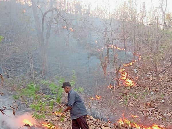 આગની ઘટનાએ વન વિભાગને દોડતું કરી દીધું. - Divya Bhaskar