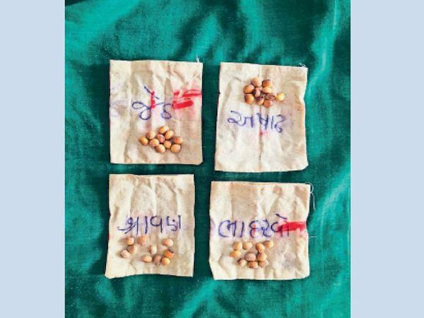 હોળીના તહેવાર નિમિત્તે દહેગામના ખેડૂત છેલ્લા 30 વર્ષથી કપડાની થેલીમાં  તુવેરના દાણા નાખી વરતારો કાઢે છે. - Divya Bhaskar