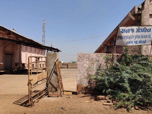 હળવદમાં ટેકાના ભાવે ઘઉંની ખરીદીના પ્રારંભે કાગડા ઉડ્યા, ઘઉં વેચવામાં ખેડૂતોમાં નિરસતા - Divya Bhaskar