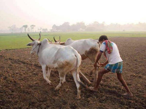 2020માં 13.47 કરોડ ચોરસમીટર જમીનની બિનખેતીની પરવાનગી આપવામાં આવી હતી( પ્રતીકાત્મક તસવીર). - Divya Bhaskar