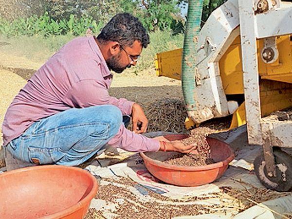 આકાખેડાના ખેડૂતે કાળા ઘઉંની ખેતી કરી તેની માહિતી આપી હતી. - Divya Bhaskar
