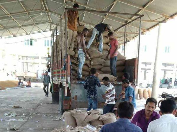 જિલ્લાના ખેડૂતો ટ્રેકટર ભરી ચણા વહેચવા માટે આવી રહ્યાં છે અને રોજ 1 હજાર કટ્ટા ખરીદી કરાઇ છે. - Divya Bhaskar