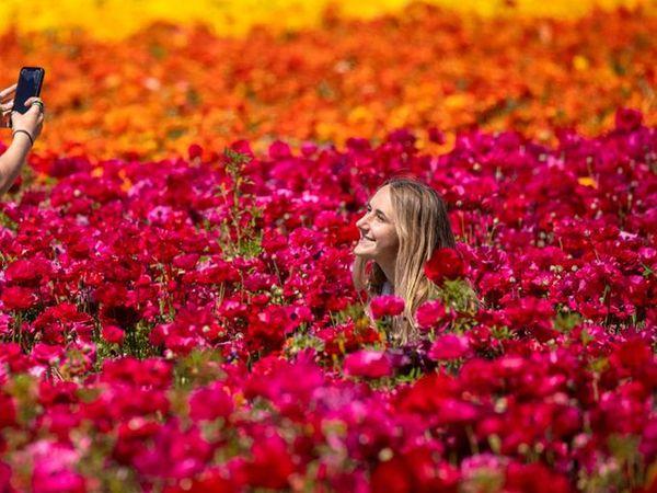 ફૂલોના ખેતરમાં ફૂલની તસવીર! - Divya Bhaskar