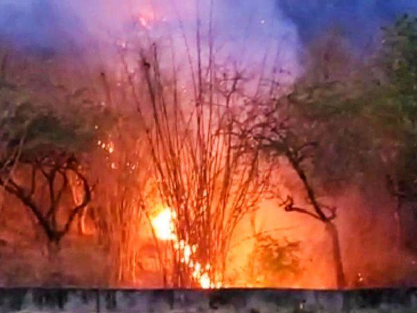 वन विभाग ने आग पर काबू पाने के लिए फायर लाइन विधि अपनाई।