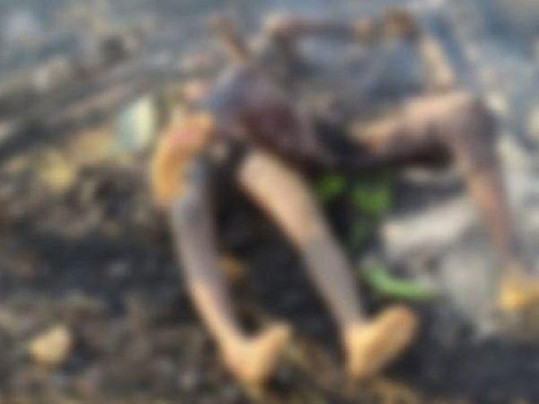 અચાનક વાતાવરણમાં પલટો આવતા તમામ લોકો એક છાપરા નીચે ઊભા હતા, જ્યાં એમના છાપરા પર વિજળી પડી હતી. - Divya Bhaskar