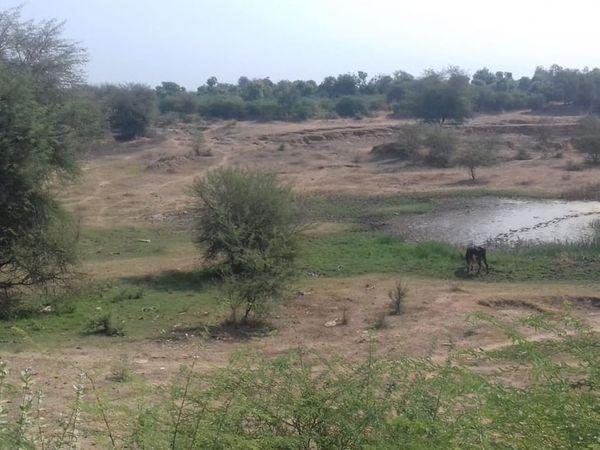 ખારેડાનું તળાવ પાણીના અભાવે ખાલીખમ ભાસી રહ્યું છે. - Divya Bhaskar