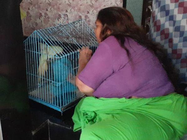 કોઇએ વન્ય જીવોને ગોંધી રાખ્યા હોય તો જાણ કરવા ગુજરાત પ્રાણી ક્રુરતા નિવારણ સંસ્થાએ લોકોને અપીલ કરી છે
