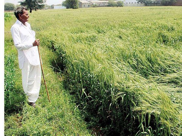 कोरोना के बावजूद गुजरात में इस साल ग्रीष्म रोपण में 10% की वृद्धि हुई है (प्रतीकात्मक छवि)।