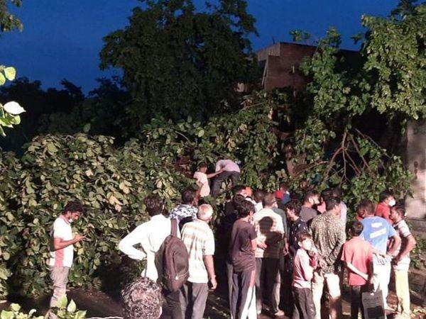 જમાલપુરમાં વૃક્ષ ધરાશાયી થઈ ગયું
