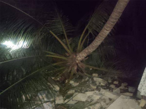 2. જૂનાગઢ જિલ્લાના ચોરવાડમાં નારિયેળીનું ઝાડ પડતાં 2 માળનું મકાન ધરાશાયી થયું.