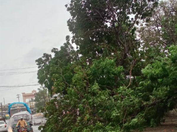 6. મોરબીમાં ભારે પવનના કારણે વૃક્ષો ધરાશાયી થયા