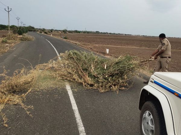પોરબંદર જિલ્લા પોલીસ દ્વારા ધરાશાયી થયેલા વૃક્ષો માર્ગ પરથી દૂર કરાયા - Divya Bhaskar