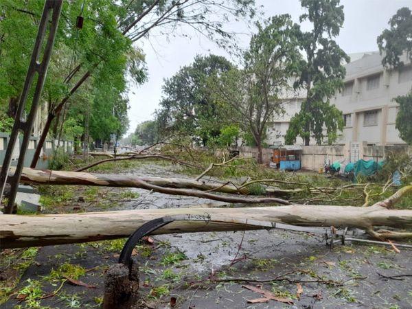 ભાવનગરમાં એકસાથે 5થી 7 વૃક્ષો પડતાં રસ્તો બંધ.