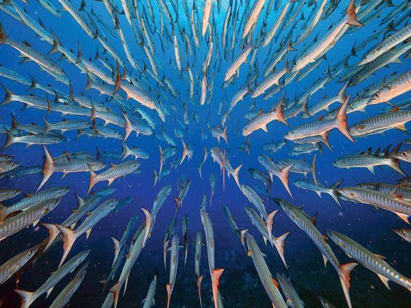 લાઉની બ્લૂ કોર્નર રીફની આ તસવીર અન્ડરવોટર કેટેગરીમાં વિજેતા બની. તે યુંગ-સેન-વૂએ ક્લિક કરી છે. તેમણે જણાવ્યું કે 5 દિવસ સુધી માછલીઓનો ભરોસો જીત્યા બાદ તેઓ આ નજારો કેમેરામાં કેદ કરી શક્યા.