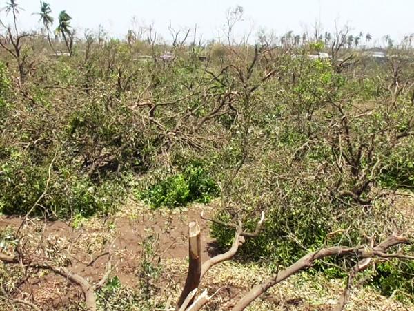 વાવાઝોડાના લીઘે ગ્રામ્ય વિસ્તારમાં થયેલ નુકસાનીની પ્રતિકાત્મક તસ્વીર - Divya Bhaskar