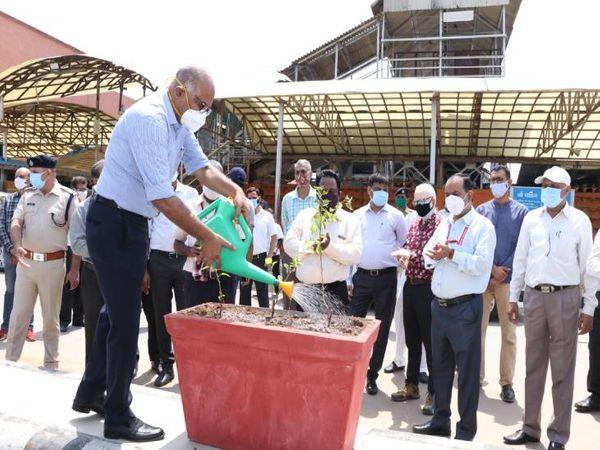 ડિવાઇડરને લીલો બનાવવા માટે ફૂલ છોડ પણ રોપવામાં આવ્યા - Divya Bhaskar