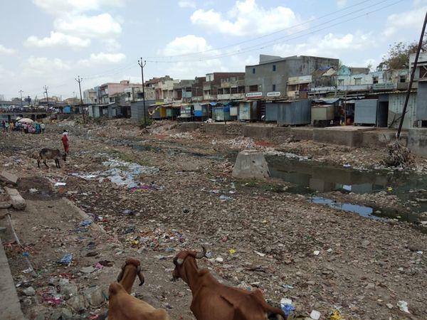 નદી ઉંડી ઉતારાય તો લોકોને પડતી હાલાકી દૂર થાય. - Divya Bhaskar