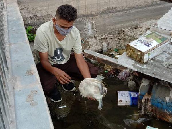 સુરસાગર તળાવમાંથી વધુ એક કાચબો મૃત હાલતમાં મળી આવ્યો હતો - Divya Bhaskar