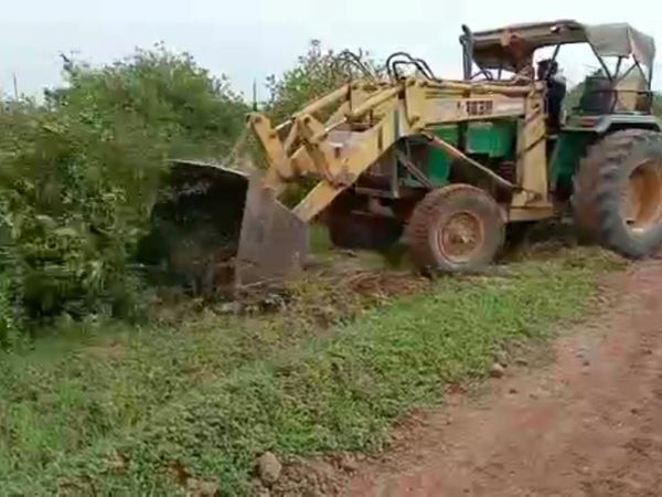 ભાવ તળિયે બેસી જતા લીંબુના બગીચા ઉપર  ખેડૂતોએ ટ્રેક્ટર ફેરવી દિધુ, યોગ્ય બજાર ભાવ ના મળતા આક્રોષ - Divya Bhaskar