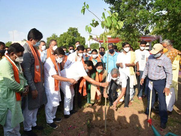 આણંદના વડોદ ગામે 500 વૃક્ષોની રોપણીનો કાર્યક્રમ યોજાયો હતો.જો કે સોશિયલ ડીસ્ન્ટસનો અભાવ જોવા મળ્યો હતો. - Divya Bhaskar