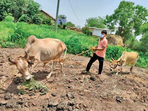 ચિરાગ ડામોર: સિવિલ સર્વિસીસની તૈયારી કરી રહ્યો છે અને રોજ ઢોર ચરાવવા જાય છે - Divya Bhaskar