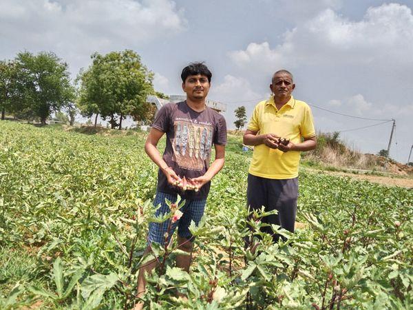 વિરપુરમાં લાલ ભીંડાની ખેતીથી લહેરાતુ ખેતર તથા યુવાન ખેડુત - Divya Bhaskar