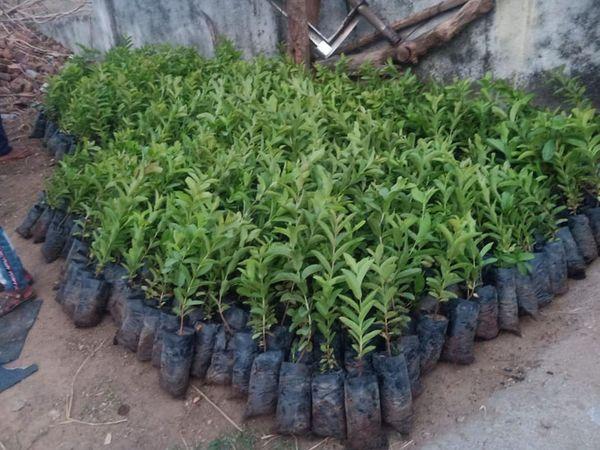 બિલે ફાઉન્ડેશન દ્વારા પર્યાવરણ દિને વૃક્ષોનું વાવેતર કરવામાં આવ્યું હતું. - Divya Bhaskar