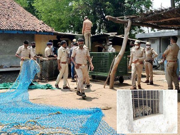 લાડપુરમા મકાનમાં ઘુસેલો દીપડાને ભારે જહેમત બાદ પોલીસ તથા વન વિભાગની ટીમ દ્વારા પકડાયો. - Divya Bhaskar